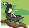 picture of a skunk on a log walking in a vector clip art illusrtation clipart