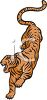 picture of a fierce tiger running and showing his teeth in a vector clip art illustration clipart