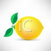 picture of a fresh lemon in a vector clip art illustration clipart