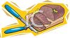 picture of meat sitting on a cutting board with a fork and a knife in a vector clip art illustration clipart