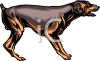 picture of a doberman standing and growling in a vector clip art illustration clipart