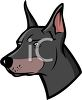picture of the head of a doberman in a vector clip art illustration clipart