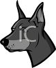 picture of the head of doberman in gray scale in a vector clip art illustration clipart