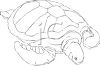 picture of a turtle in black and white in a vector clip art illustration clipart