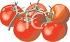 picture of fresh tomatoes on the vine in a vector clip art illustration clipart