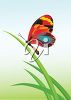 picture of a colorful butterfuly sitting on green foliage in a vector clip art illustration clipart