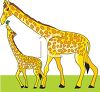 picture of a mother giraffe and her calf. She is feeding her calf greens in a vector clip art illustration clipart