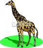 Picture of an adult giraffe standing in grass in a vector clip art illustration clipart
