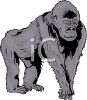 picture of a gorilla standing on all fours in a vector clip art illustration clipart