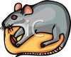 picture of a cute cartoon mouse nibbling on cheese in a vector clip art illustration clipart