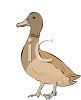 picture of a brown goose on a white background in a vector clip art illustration clipart