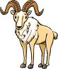 picture of a goat with big wide curved horns in a vector clip art illustration clipart