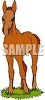 picture of an adorable foal standing in a patch of grass in a vector clip art illustration clipart
