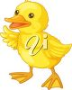 picture of a young duck on a white background in a vector clip ar tillustration clipart