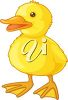 picture of a young duck in a vector clip art illustration clipart