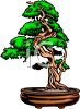 picture of a bonsai tree in a planter in a vector clip art illustration clipart