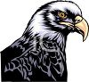 picture of the head of a bald eagle in a vector clip art illustration clipart
