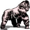 picture of a gorilla walking on a white background in a vector clip art llustration clipart