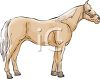 picture of a palamino horse standing on a white background in a vector clip art illustration clipart