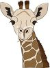 picture of the face of a giraffe in a vector clip art illustration clipart