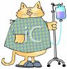 picture of a chubby cat wearing a hospital gown hooked up to an I.V in a vector clip art illustration clipart