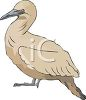 picture of a bird in a vector clip art illustration clipart