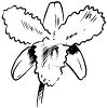 Spring Daffodil Flower clipart