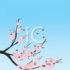 Tree with Spring Blossoms and Blue Sky clipart