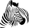 Realistic clipart image of a zebra. clipart