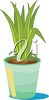 Leafy Plant Growing in a Pot clipart