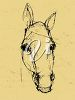 Sketch Drawing of a Horse Head clipart