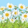 Daisies and Ladybugs clipart
