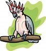 Cockatoo Sitting on a Branch clipart