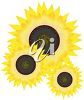 Sunflowers clipart