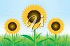 Sunflowers in a Field clipart