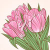 Bouquet of Tulips clipart