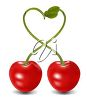 An illustration of two cherries joined at the stem clipart