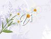 A silver background with daisies clipart