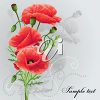 A poppy on a grey background clipart