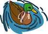 A mallard duck in the water clipart