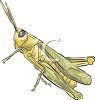 grasshoppers image