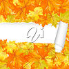 Maple leaf paper clipart