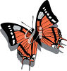 A pretty butterfly clipart