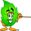 Cartoon Green Leaf Character Holding a Pointer clipart
