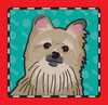 Pomeranian dog icon graphic clipart
